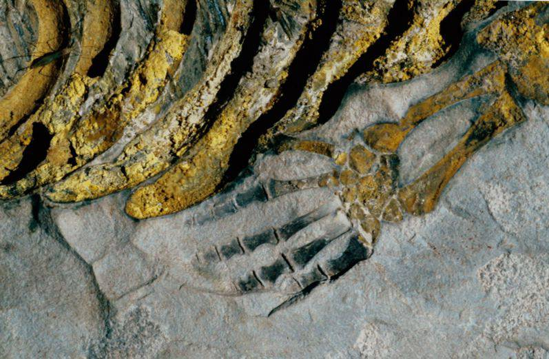 Mesosaurus Fossil Camp: Keetmanshoop - Chalets
