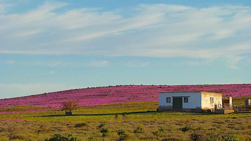 Namaqua West Coast