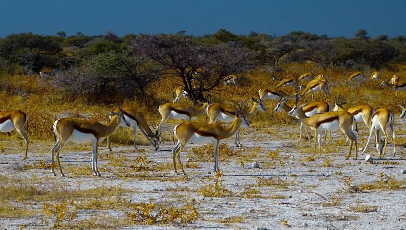 Etosha East and Tsumeb