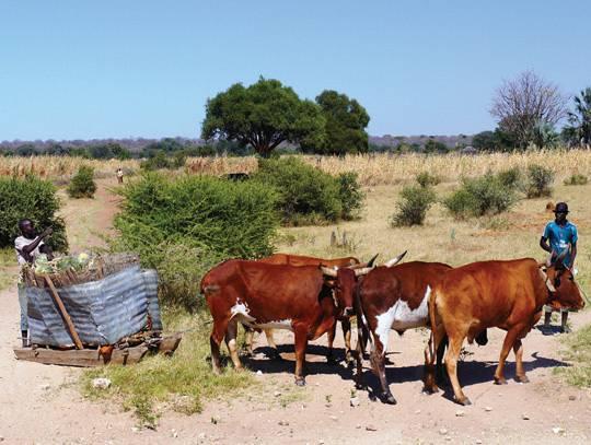 Okavango West