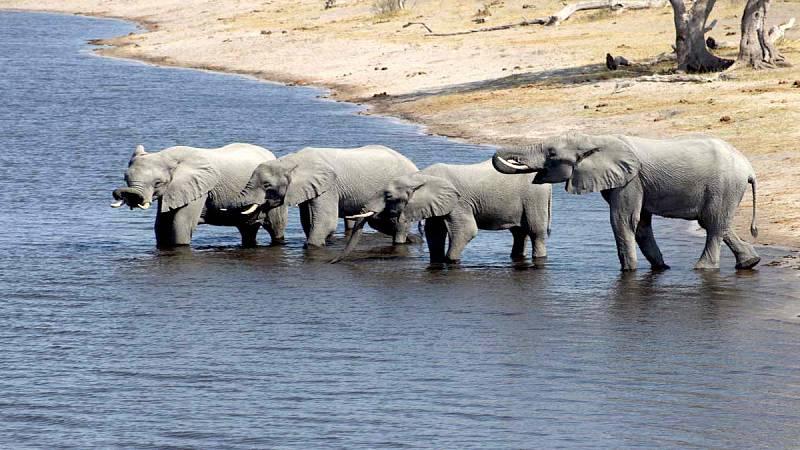 Chobe Namibia / Botswana