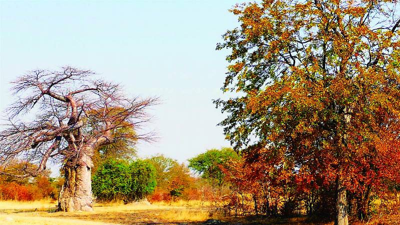 Zambezi / Katima Mulilo