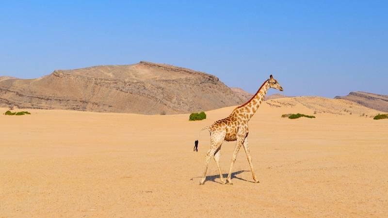 Palmwag / Sesfontein